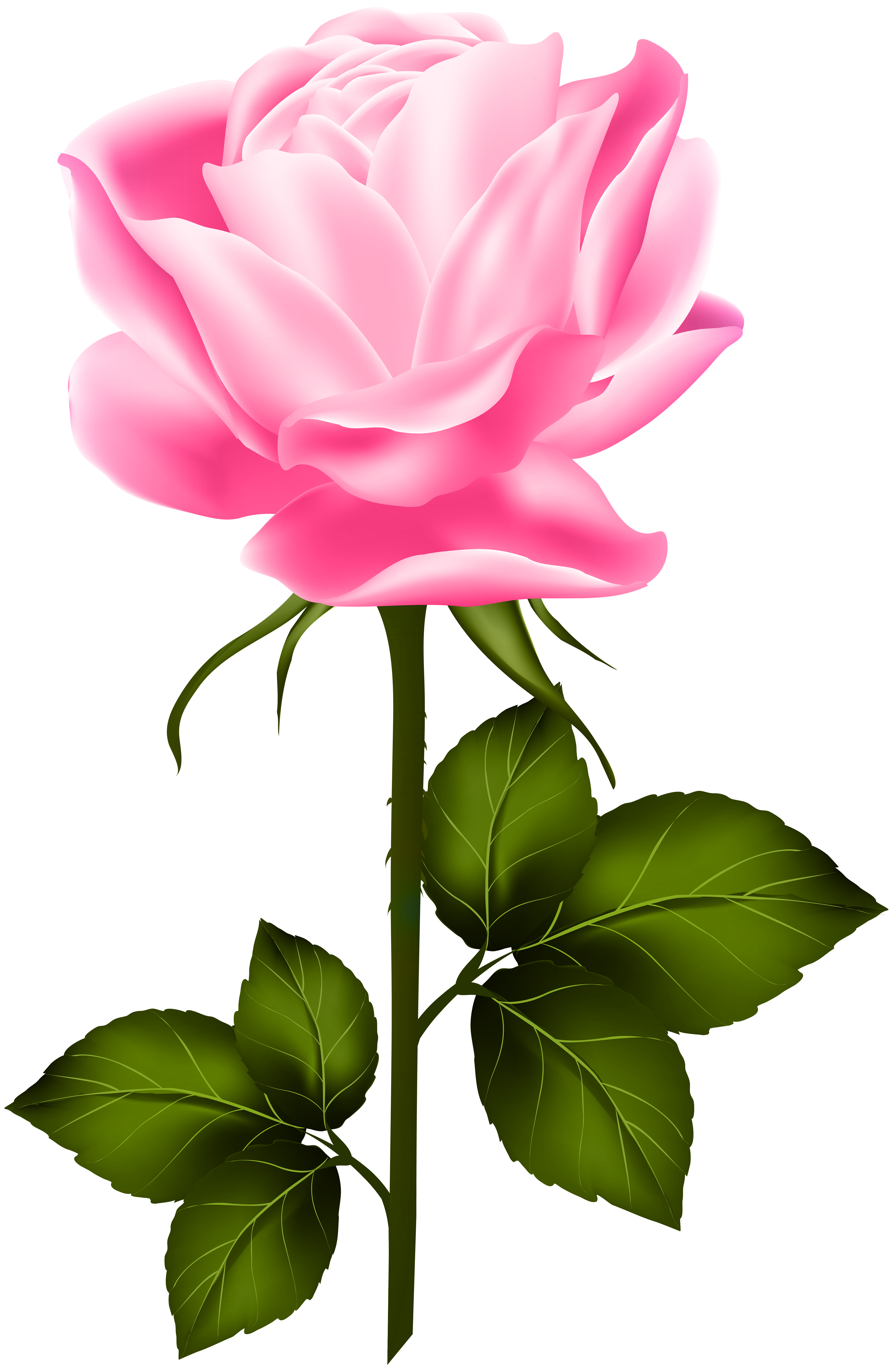 Pink with stem png. Clipart rose leaf
