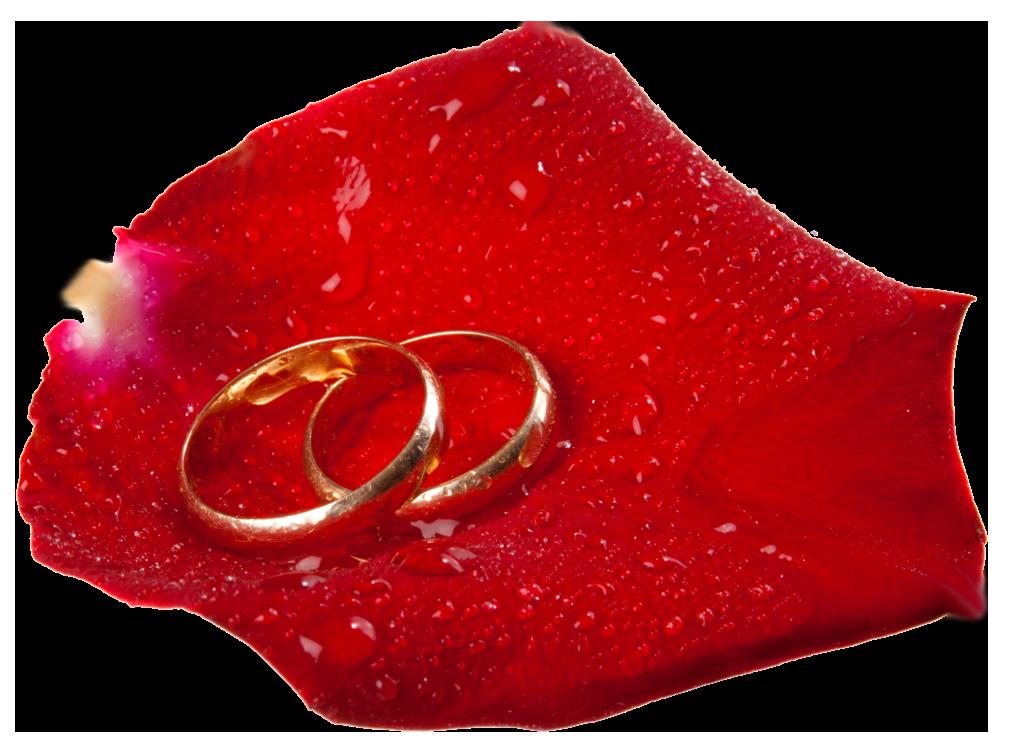 Rose clipart maroon. Wedding rings in petal