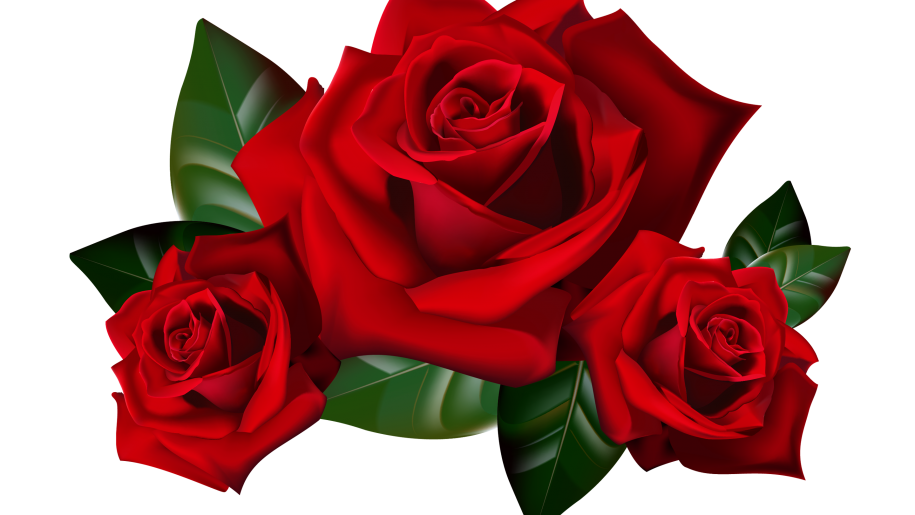 Hd clipart backgrounds wallpapers. Roses png images