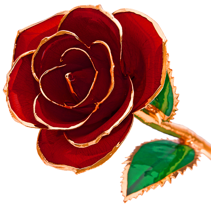 k dipped real. Clipart roses rose gold