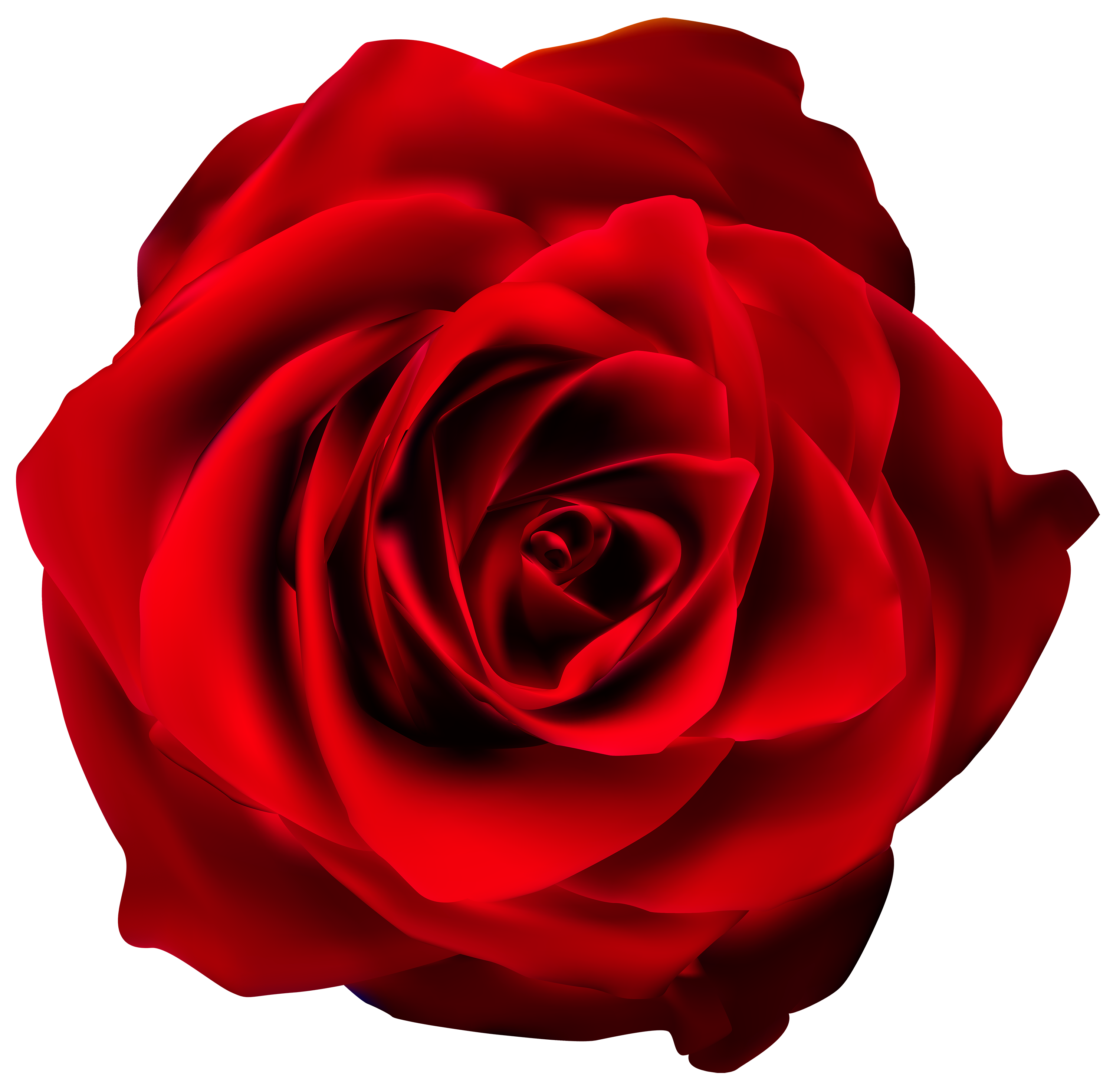 Drawing rose stock photography. Clipart roses maroon
