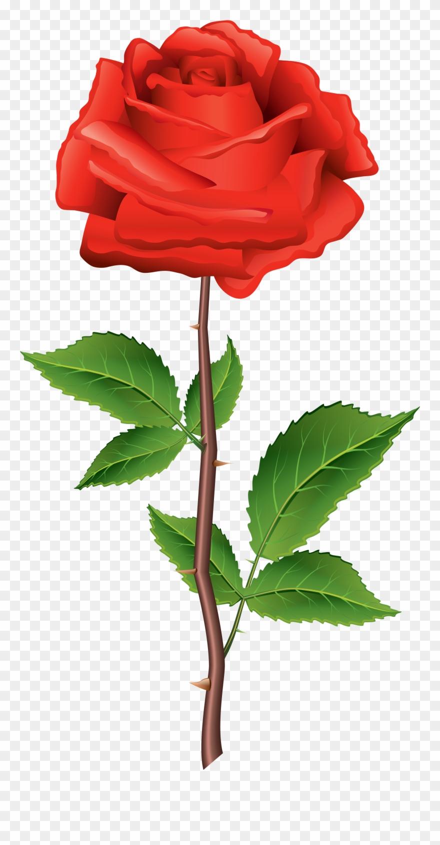 Rose clipart mini rose. Beautiful flower carhartt wip
