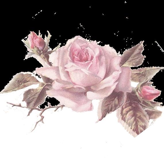 Pale pink l minas. Clipart rose mini rose