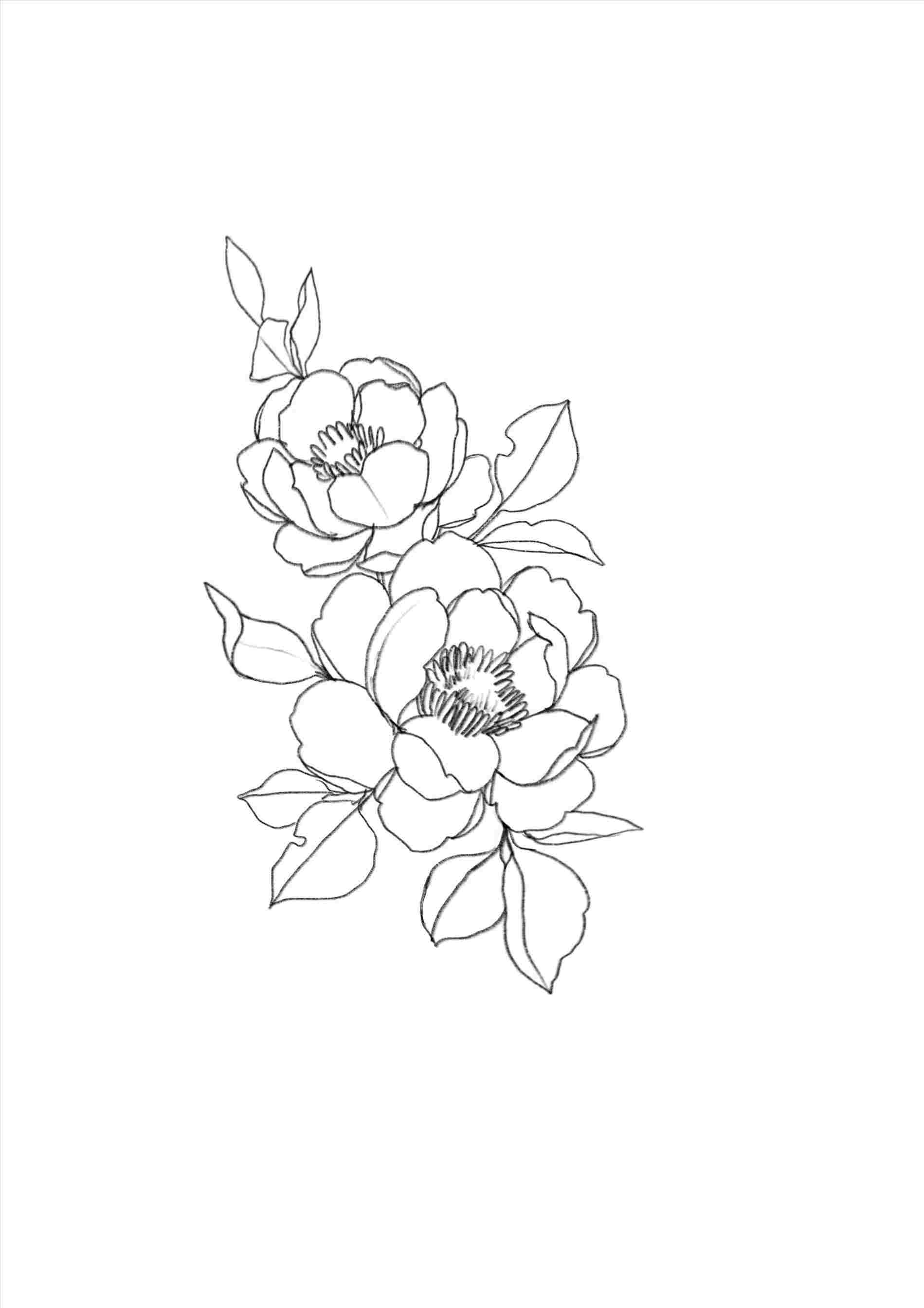 Aesthetic drawing . Rose clipart minimalist