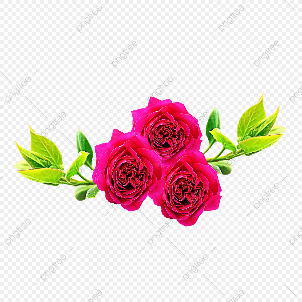 Red flower flowers modern. Rose clipart natural