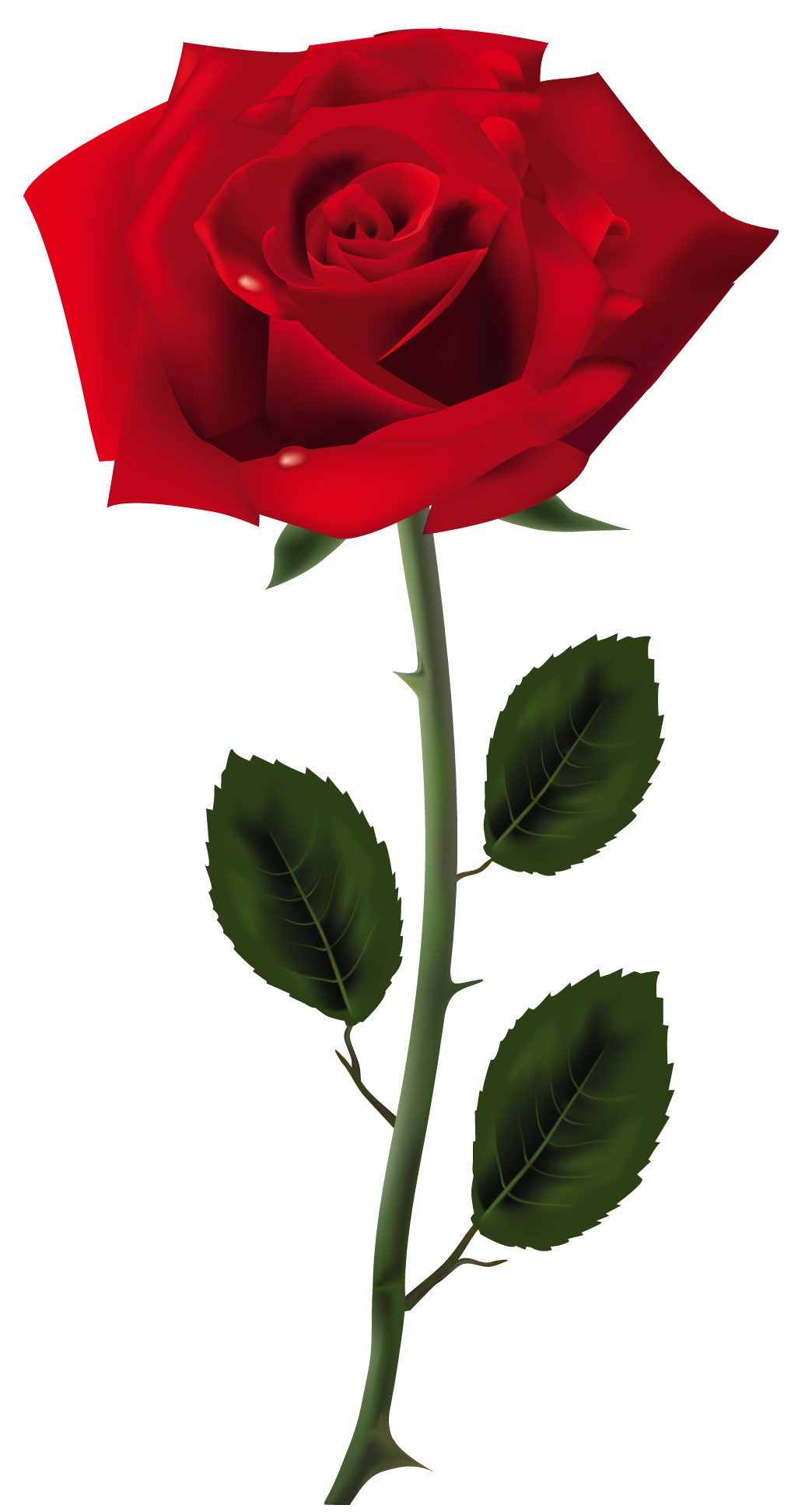 Funeral clipart floral. Red rose png art