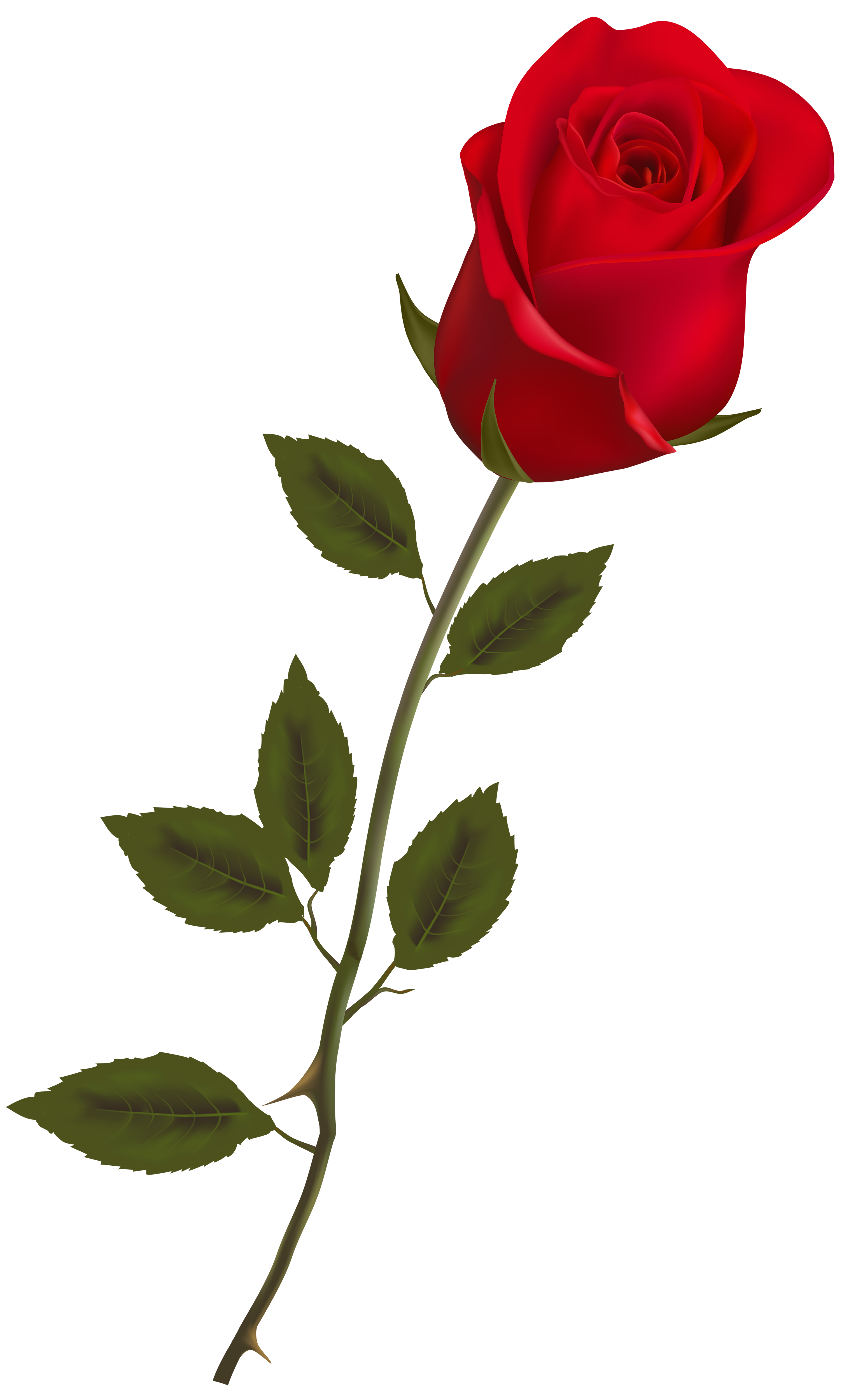 Flower stem png. Beautiful red rose clipart