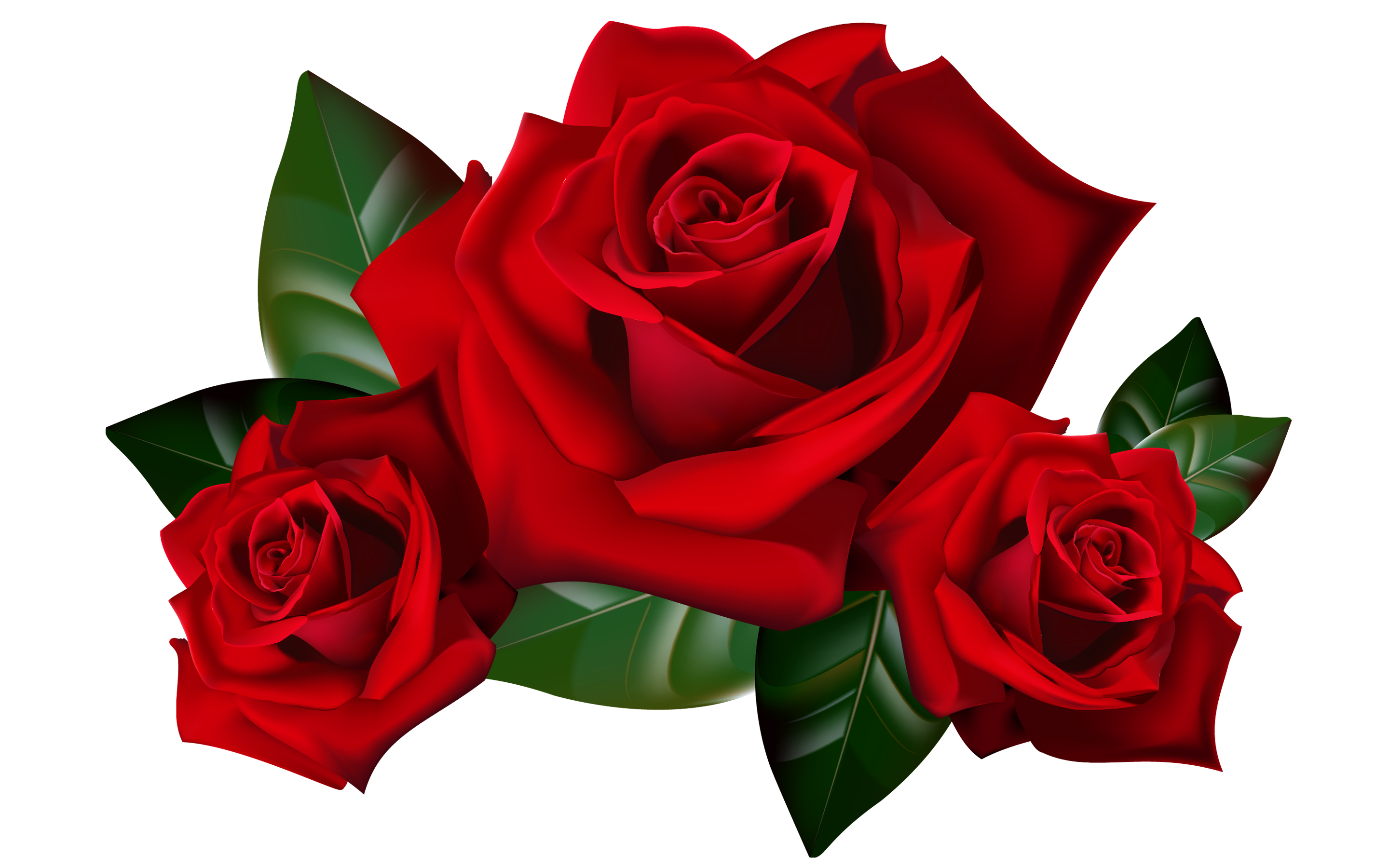Rose clipart high resolution. Red roses png picture