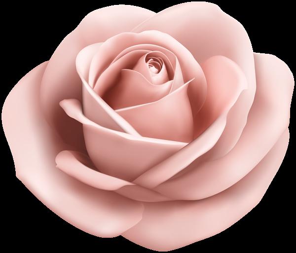 Soft transparent png clip. Clipart rose peach rose