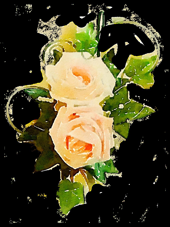Free flower png vine. Clipart rose peach rose