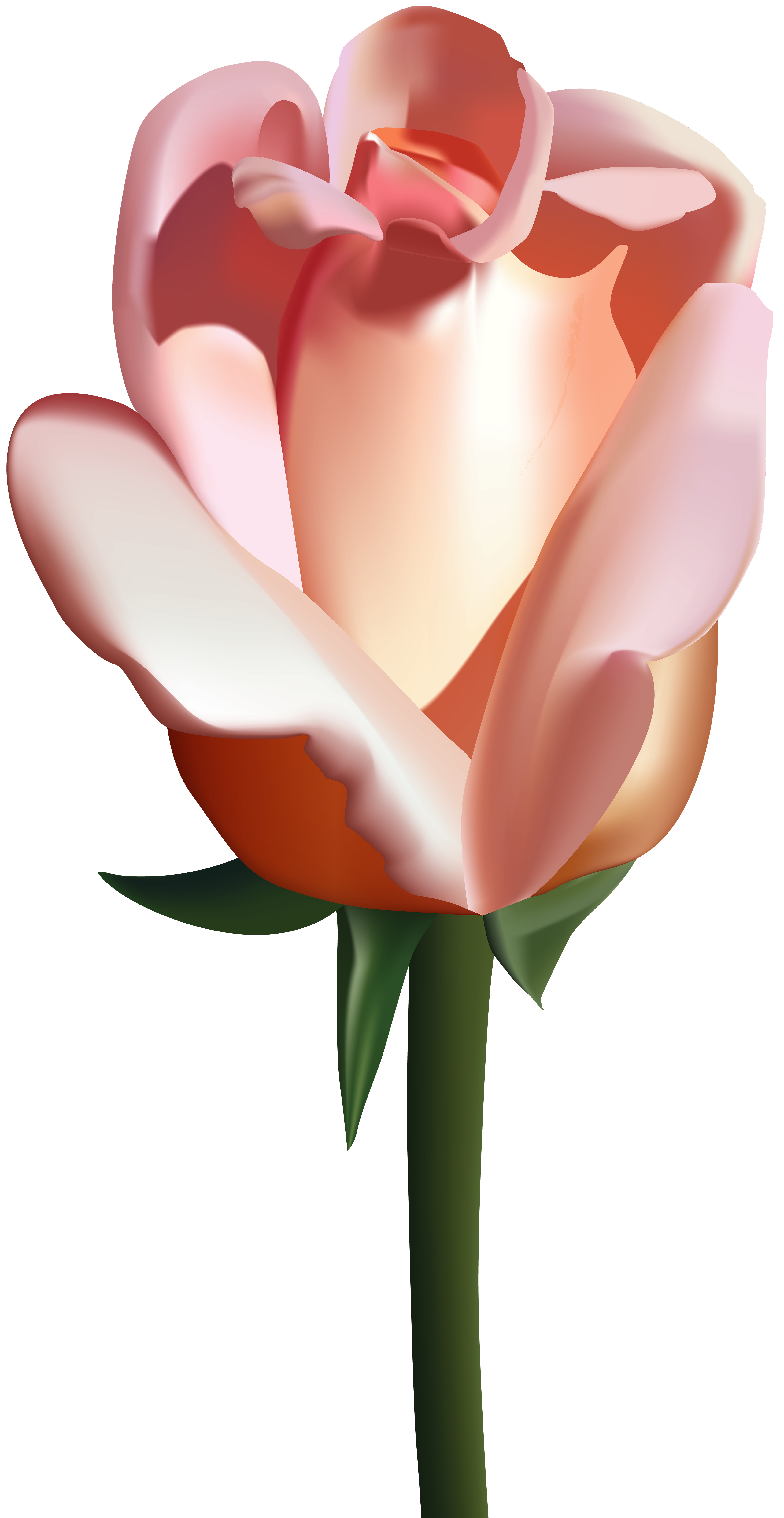 Png clip art image. Clipart roses peach rose
