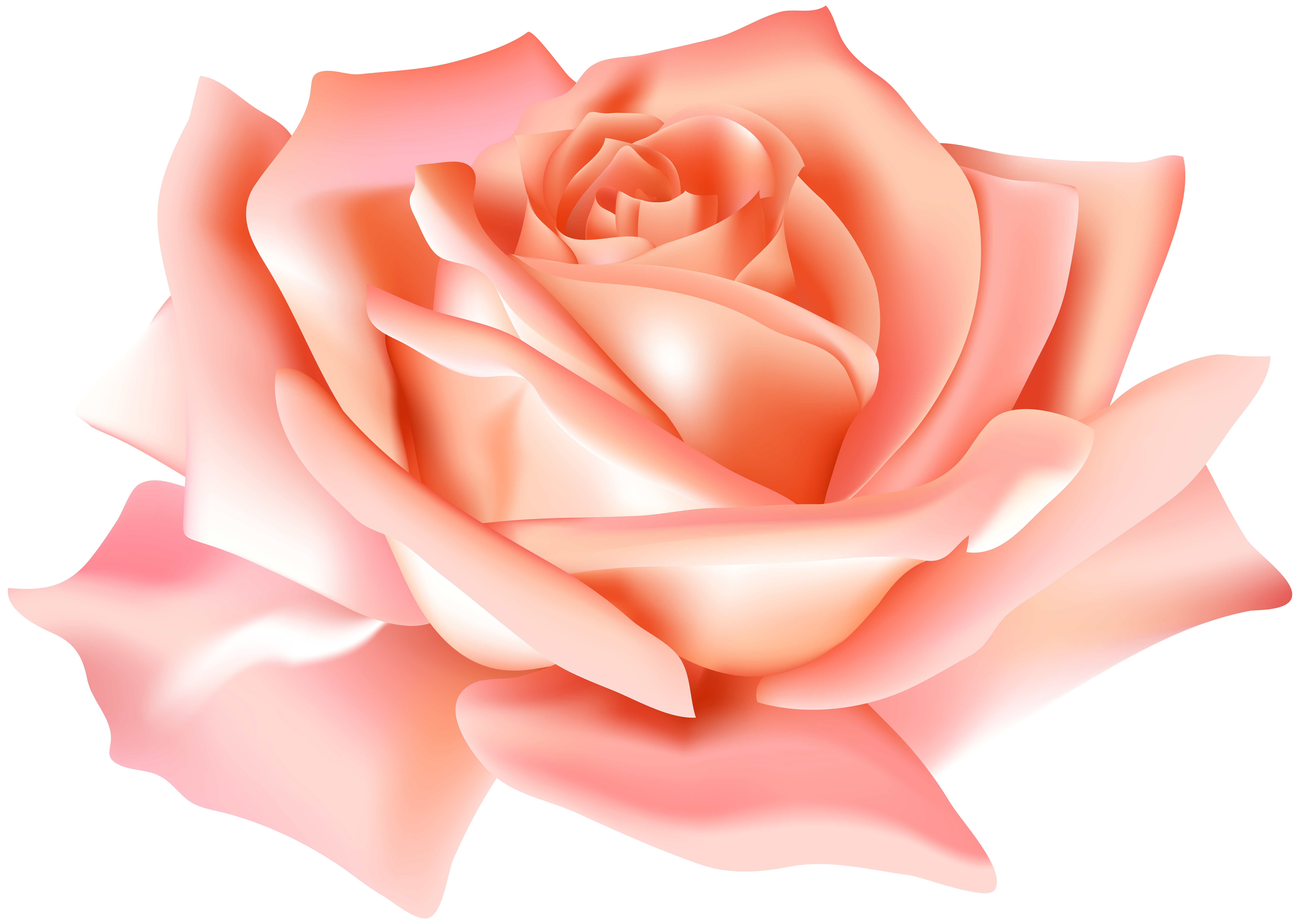 Clipart roses peach rose. Flower png clip art