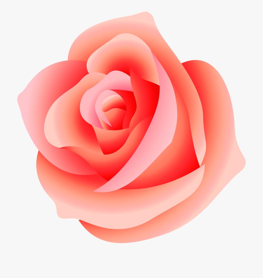Pink png format transparent. Clipart rose peach rose