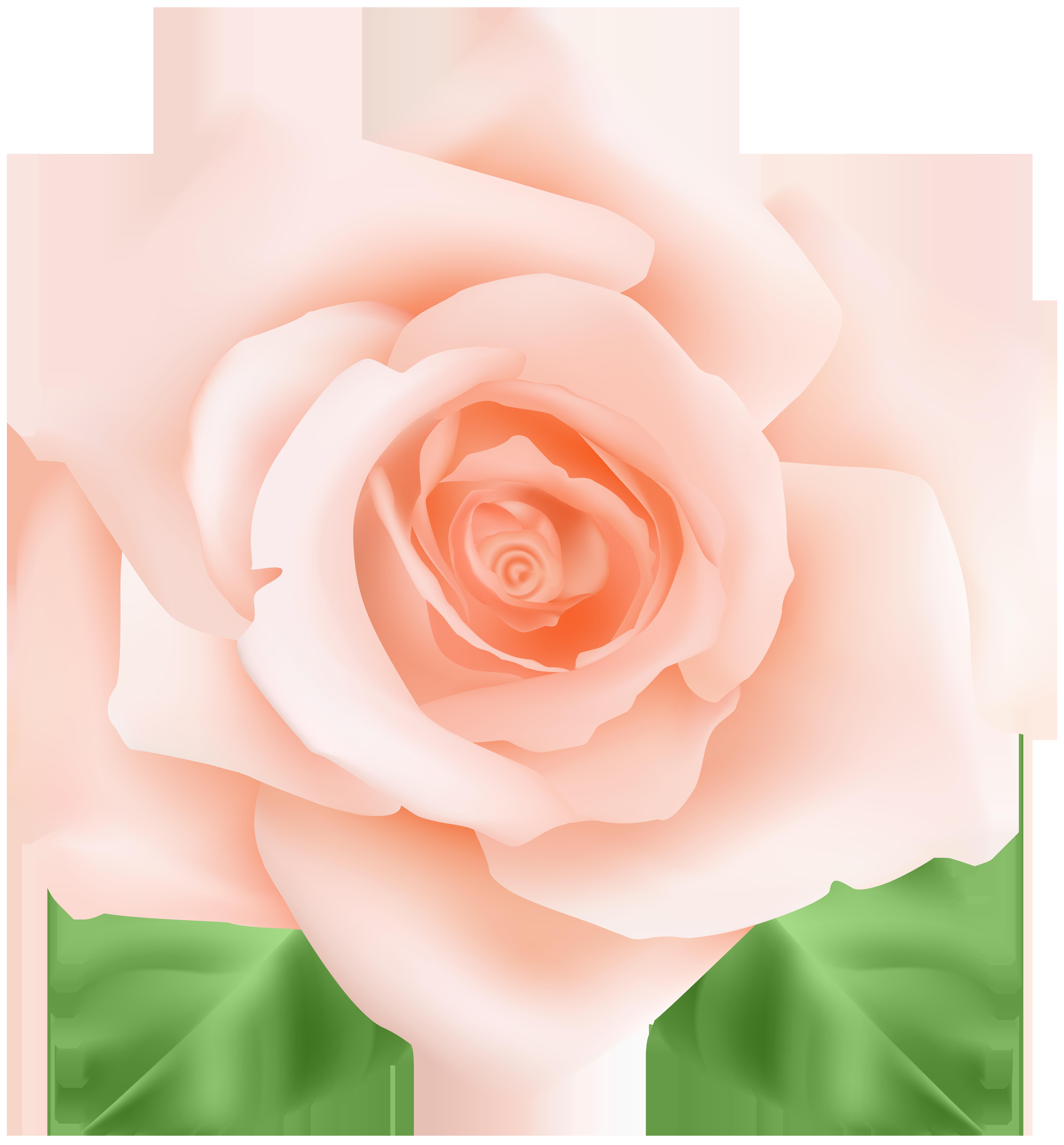 Png clip art image. Clipart rose peach rose