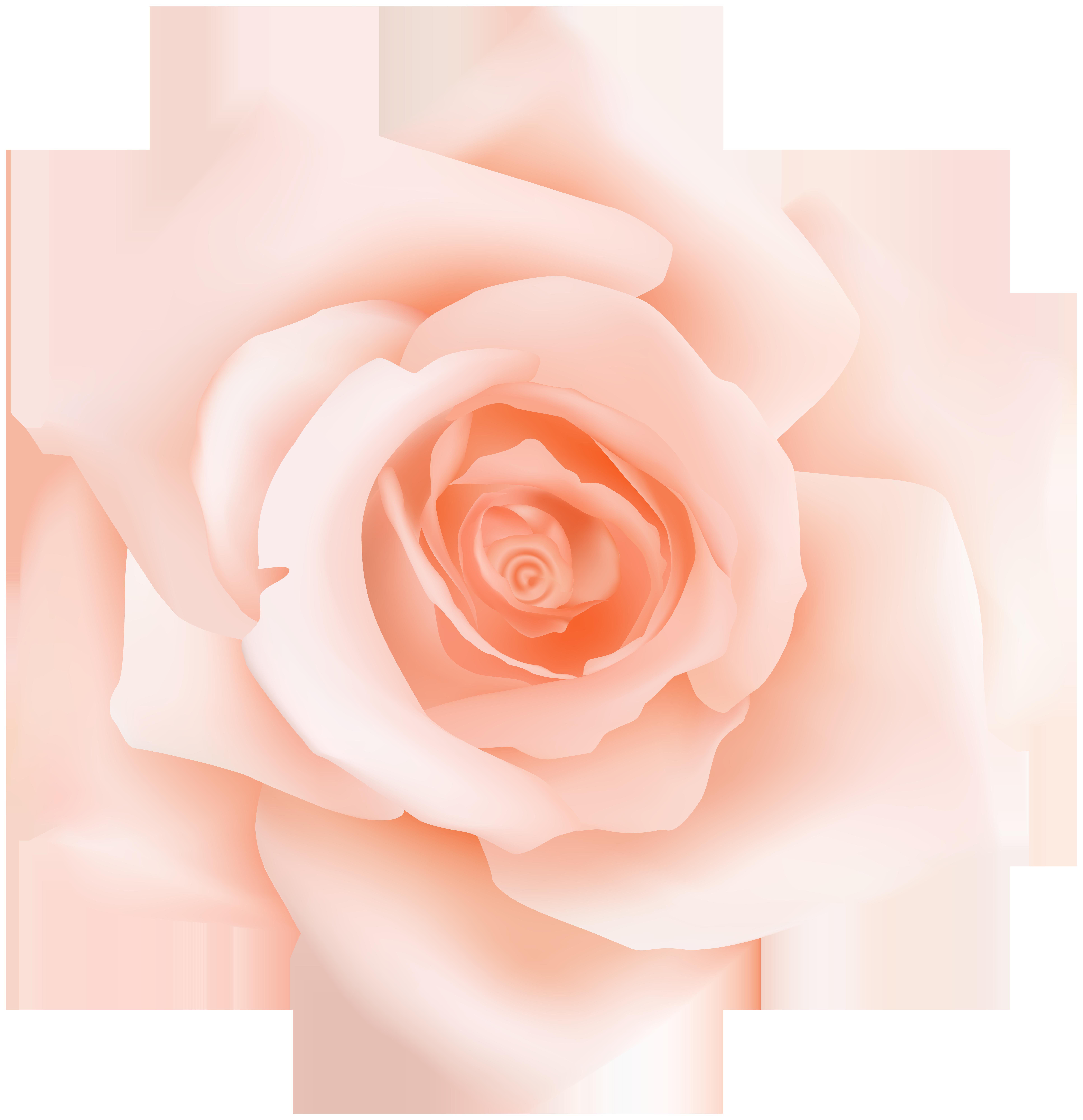 Transparent clip art gallery. Clipart rose peach rose