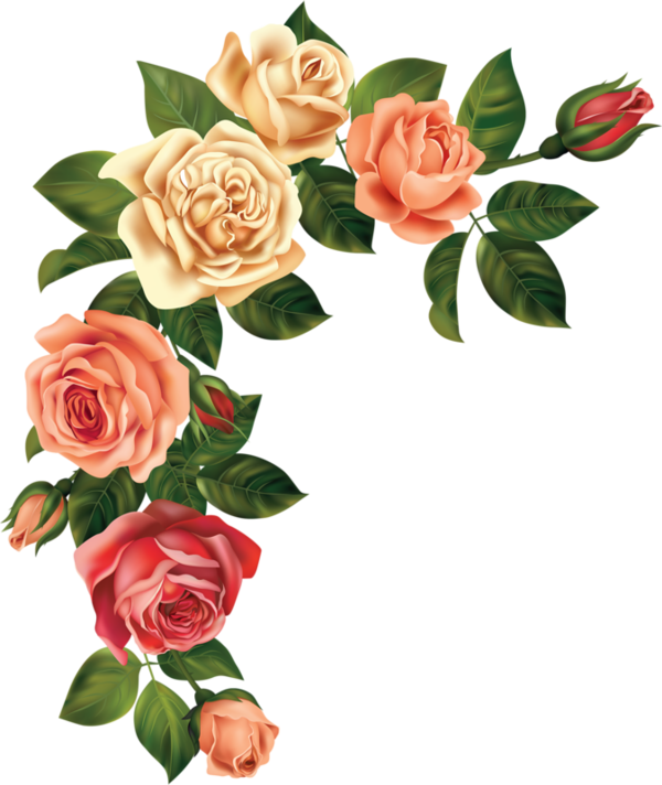 Clipart rose pearl. Roses pink roze rosa