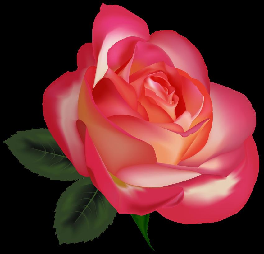 Clipart rose pearl. Beautiful image png free
