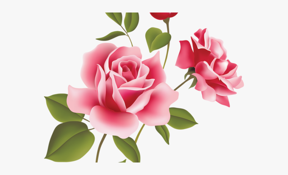 Clipart roses pink rose. Png free