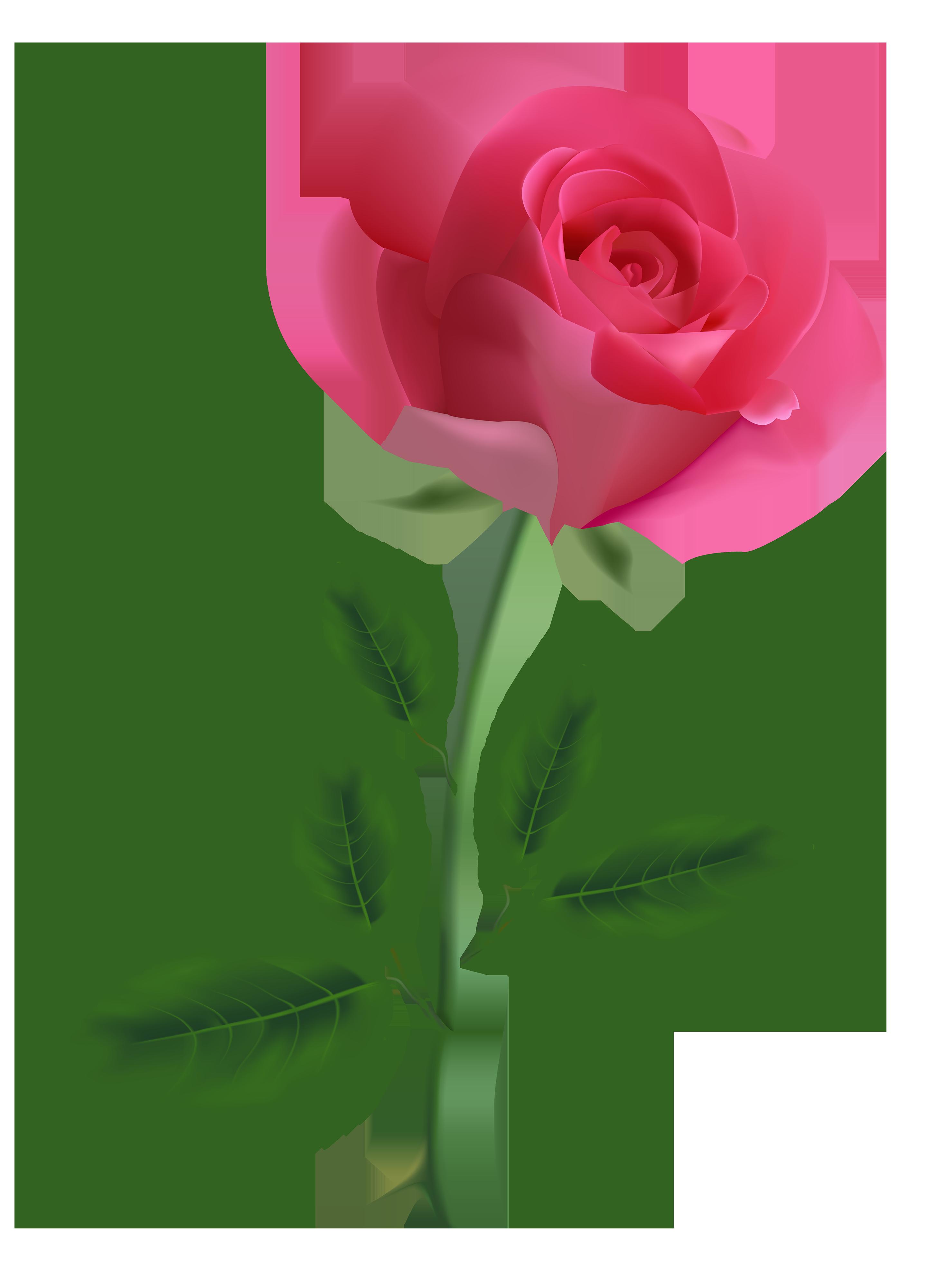 Pink rose clipart image. Single flower png