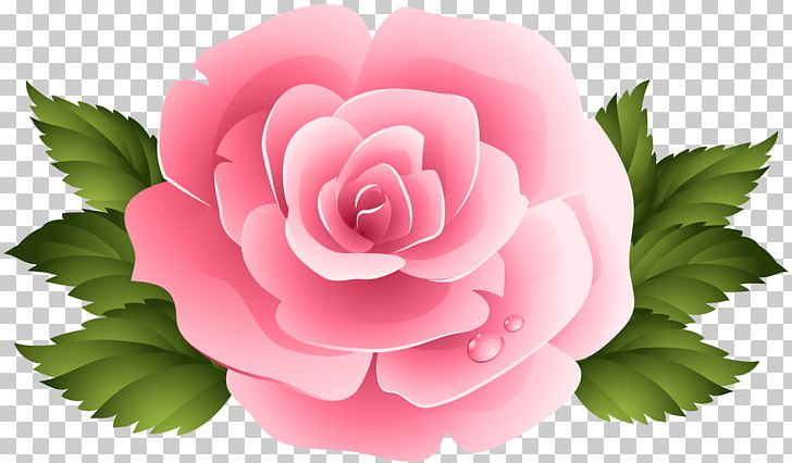 Garden centifolia png beach. Clipart roses pink rose