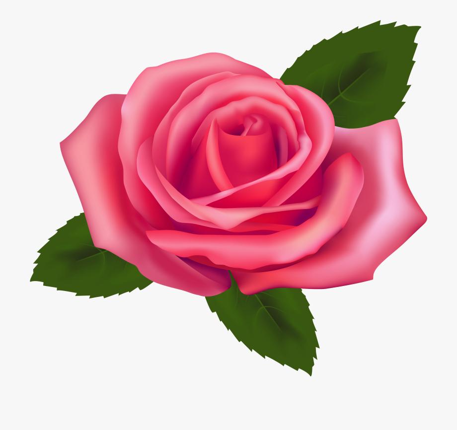Beautiful png . Clipart rose pink rose