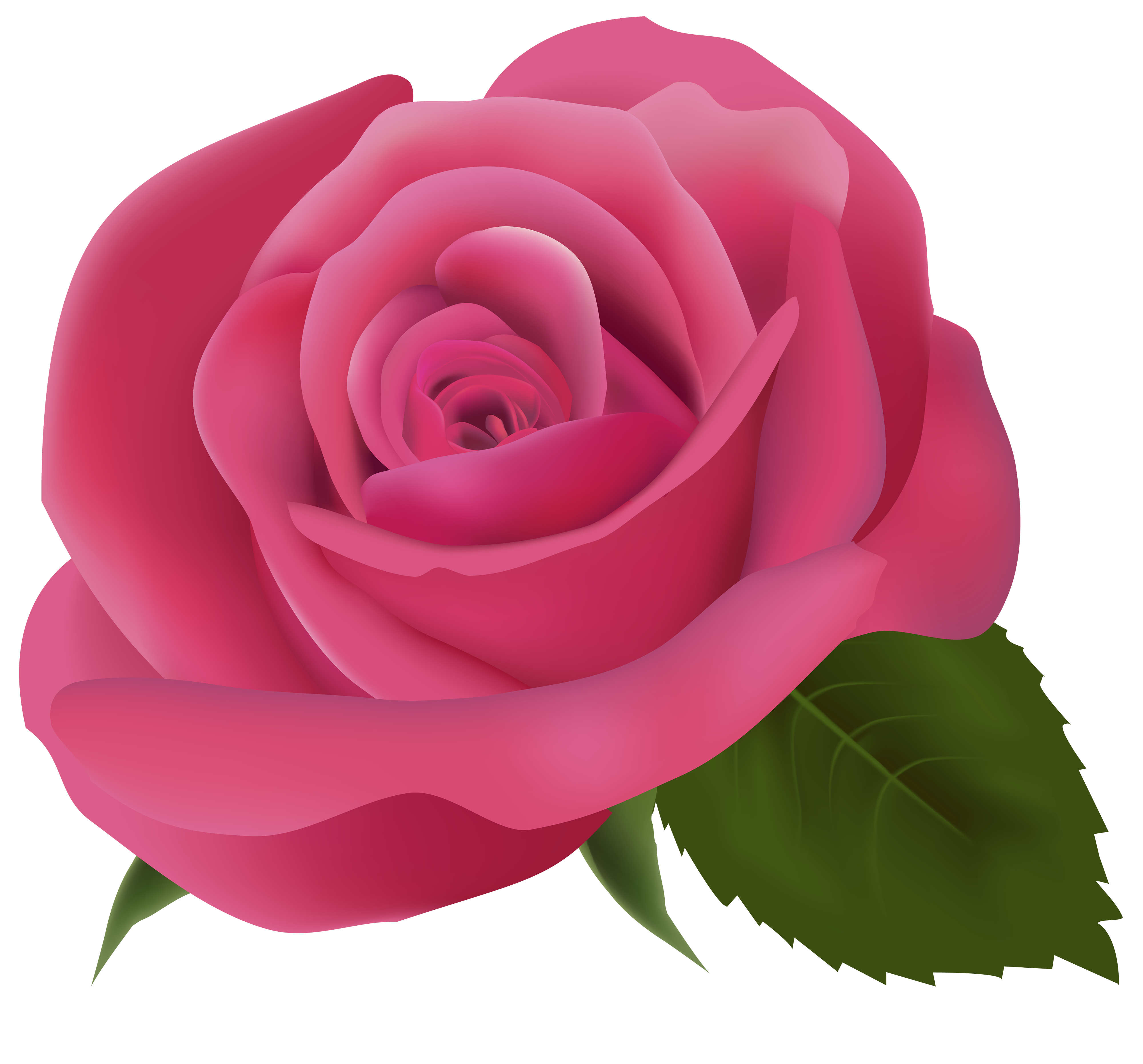 Clipart roses clear background. Pink clip art rose