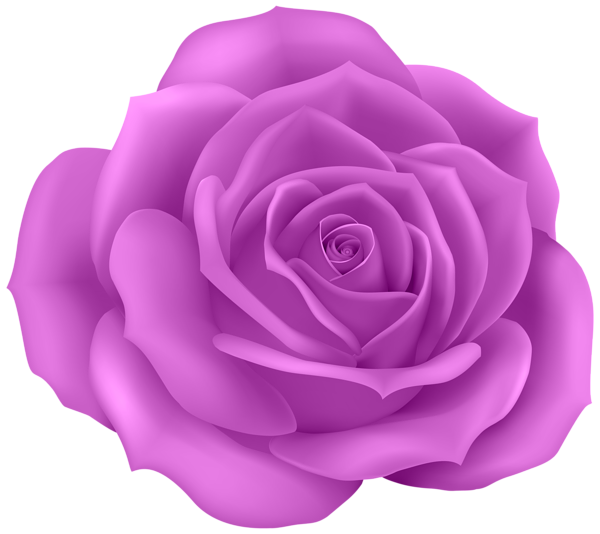Clipart roses purple. Gallery png