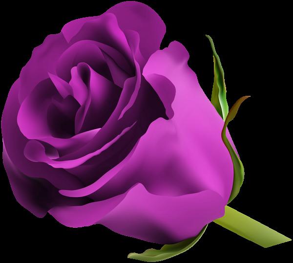 Rose png clip art. Square clipart neon purple
