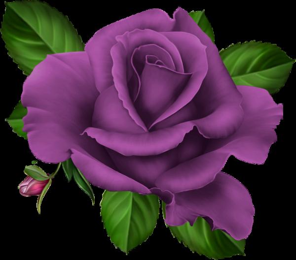 Clipart roses purple. Pink roze rosa kwiaty