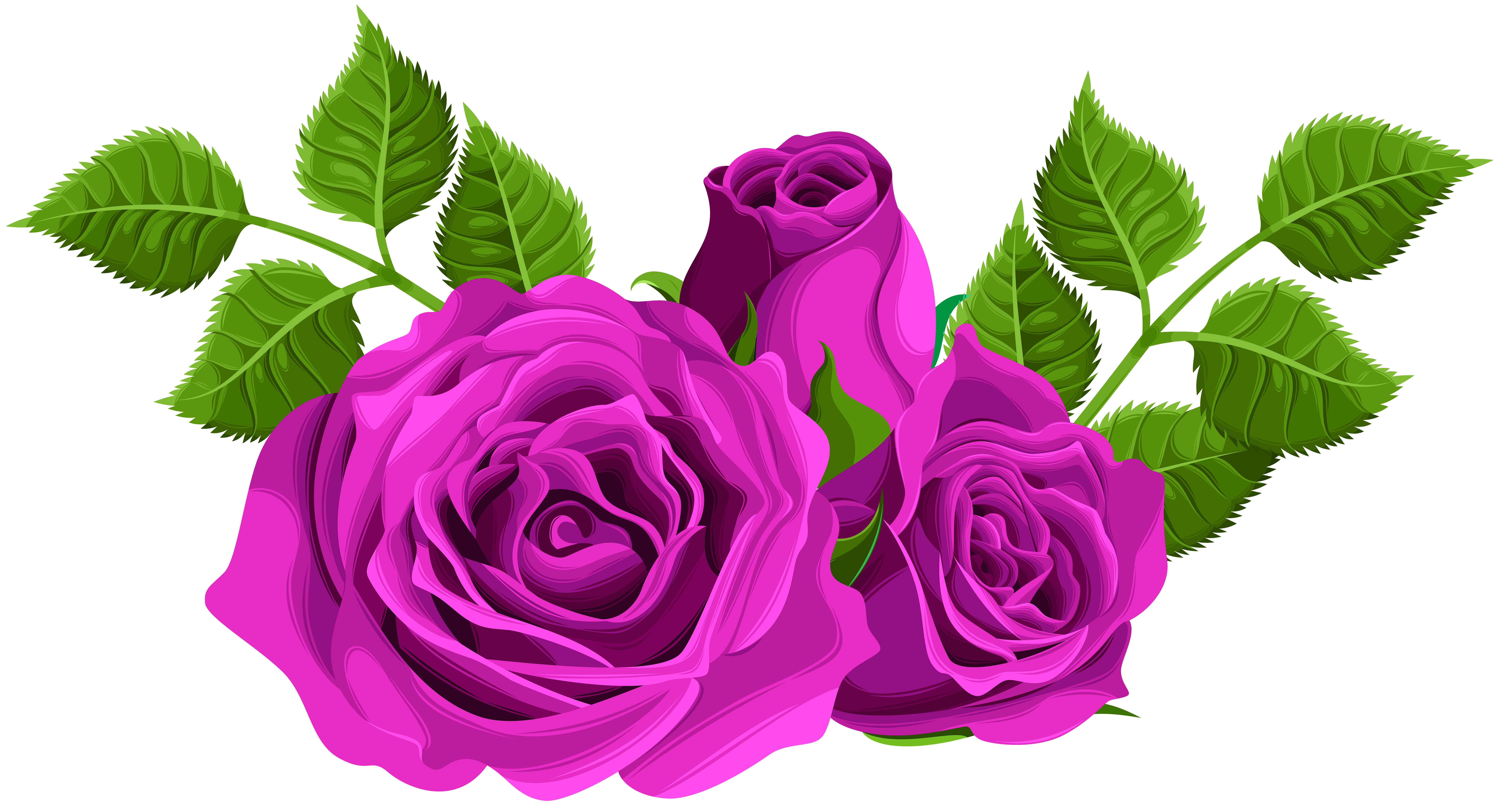 Clipart roses purple. Decorative png clip art
