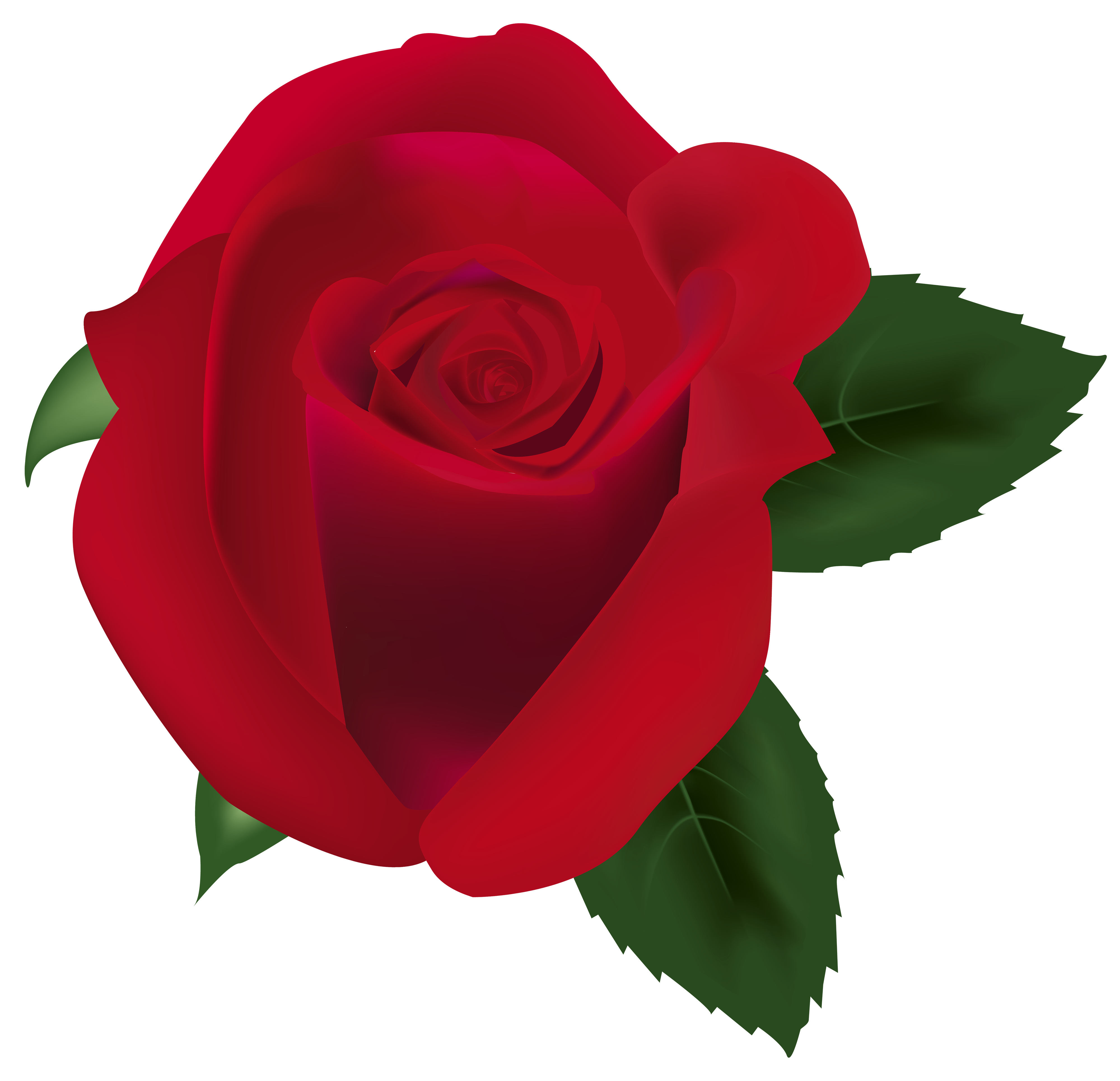 Rose png images. Red clipart image best