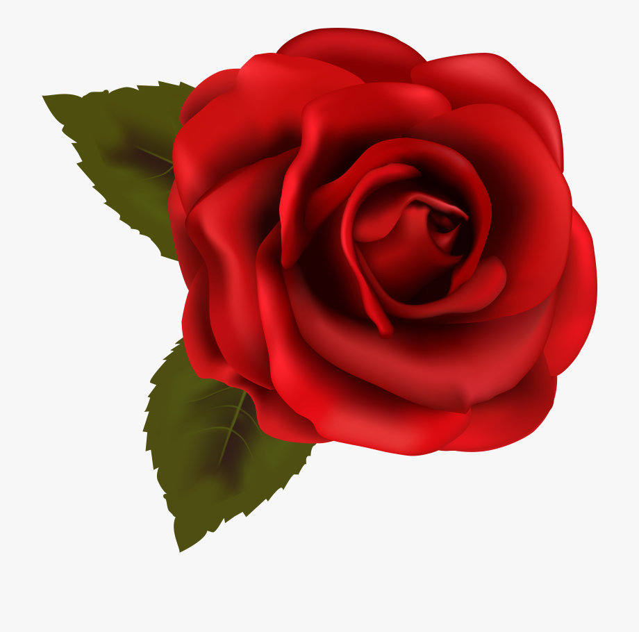 Red rose backgroundless . Clipart roses transparent background