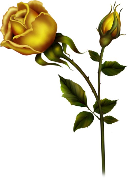 Rose clipart rose bud. Yellow with png gallery