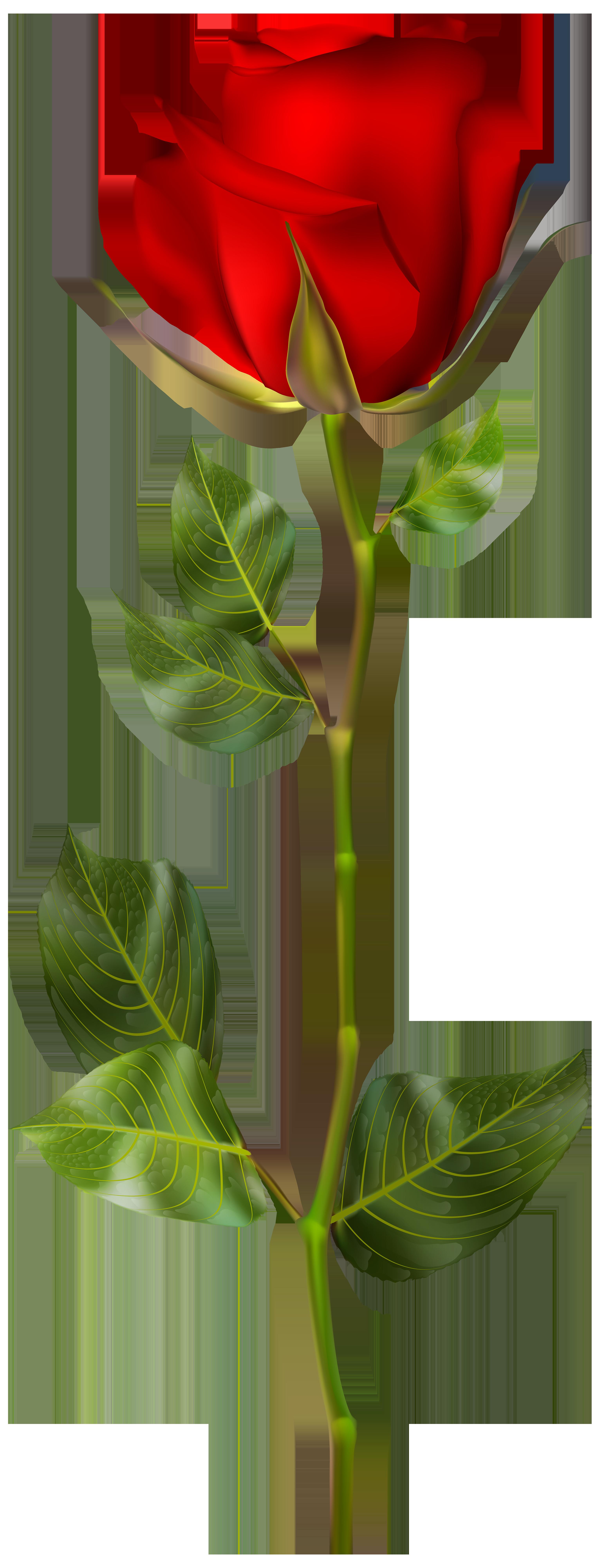 Bud at getdrawings com. Clipart rose rose bush