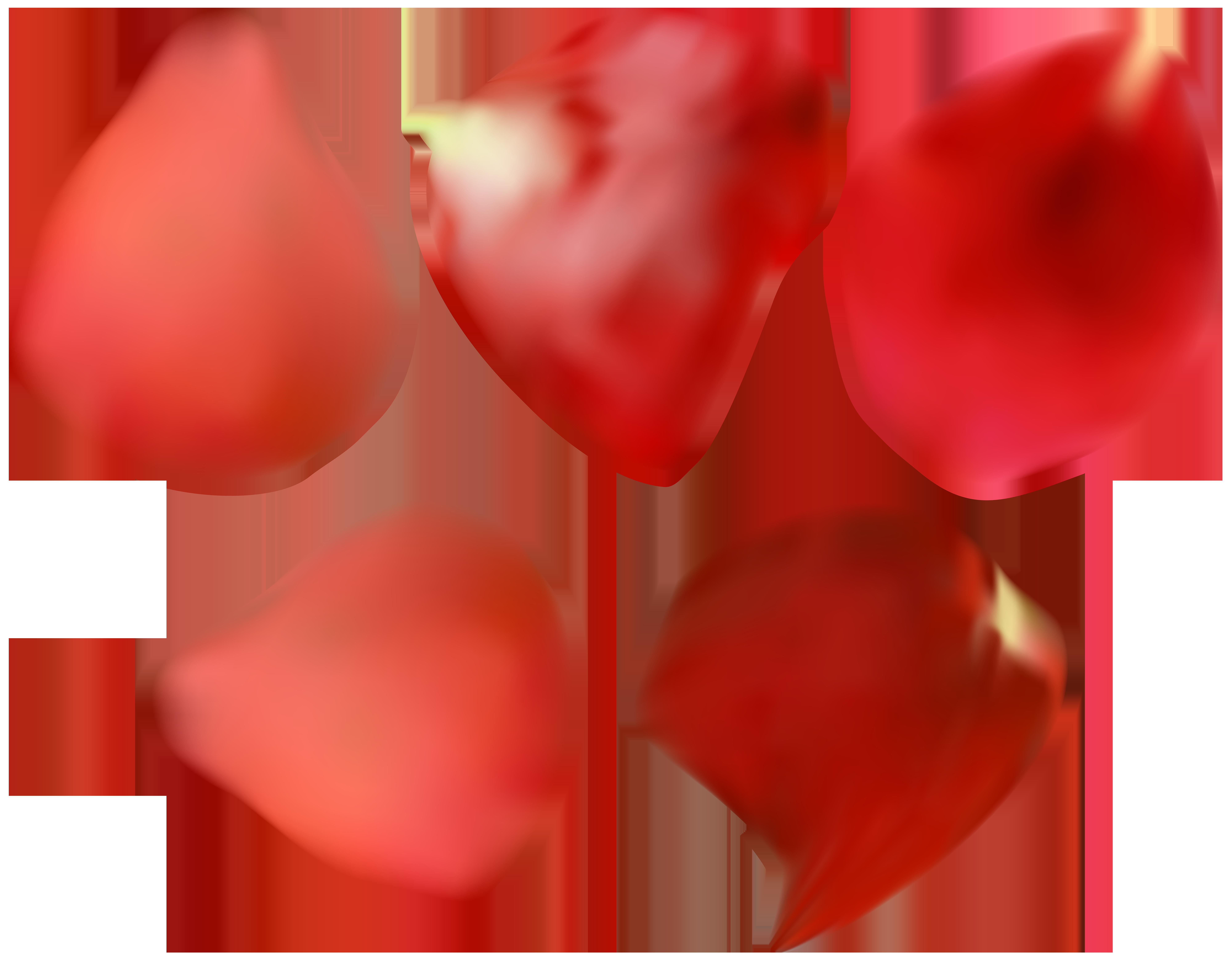 Red transparent png image. Clipart rose rose petal