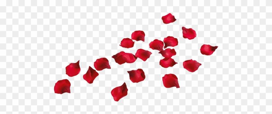 Clipart rose rose petal. Petals png transparent