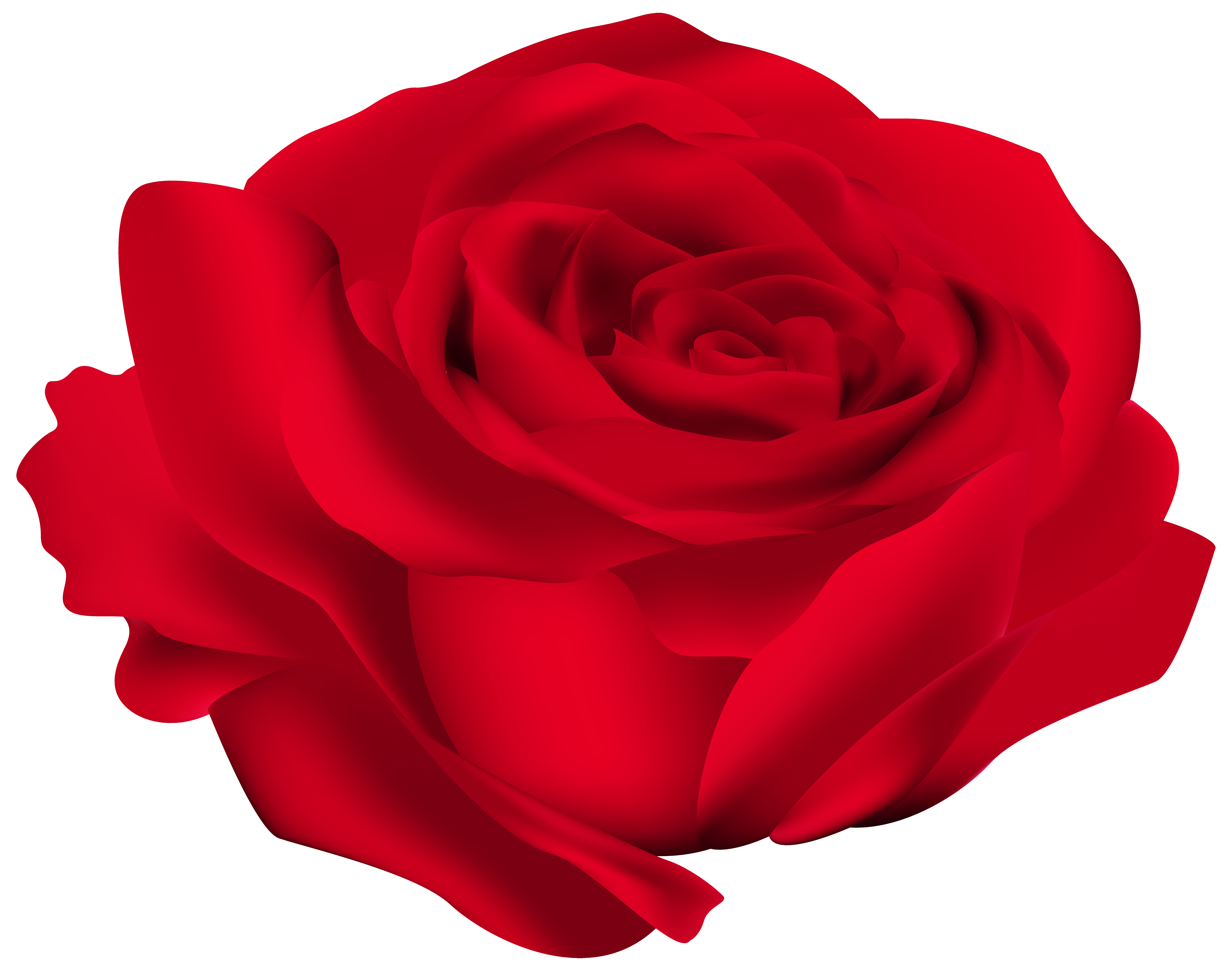 Rose png images. Red flower image gallery
