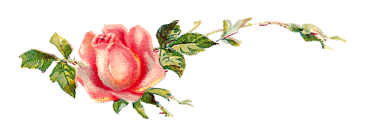 Clipart rose shabby chic. Antique images pink digital
