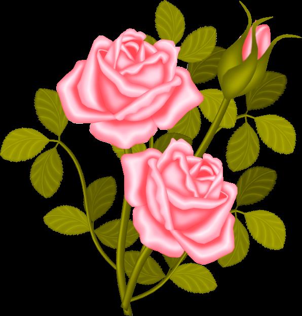 Plant clip art just. Clipart rose shrub
