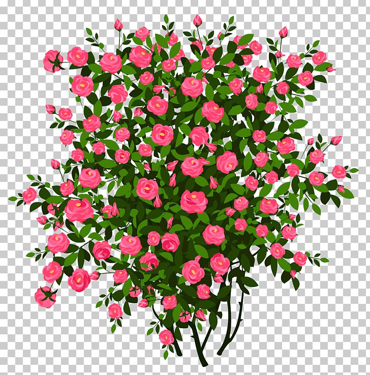 Flower png annual plant. Clipart rose shrub