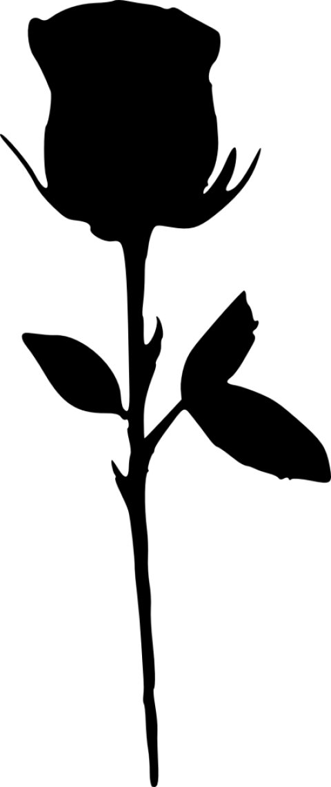 Clipart rose silhouette. Png free images toppng