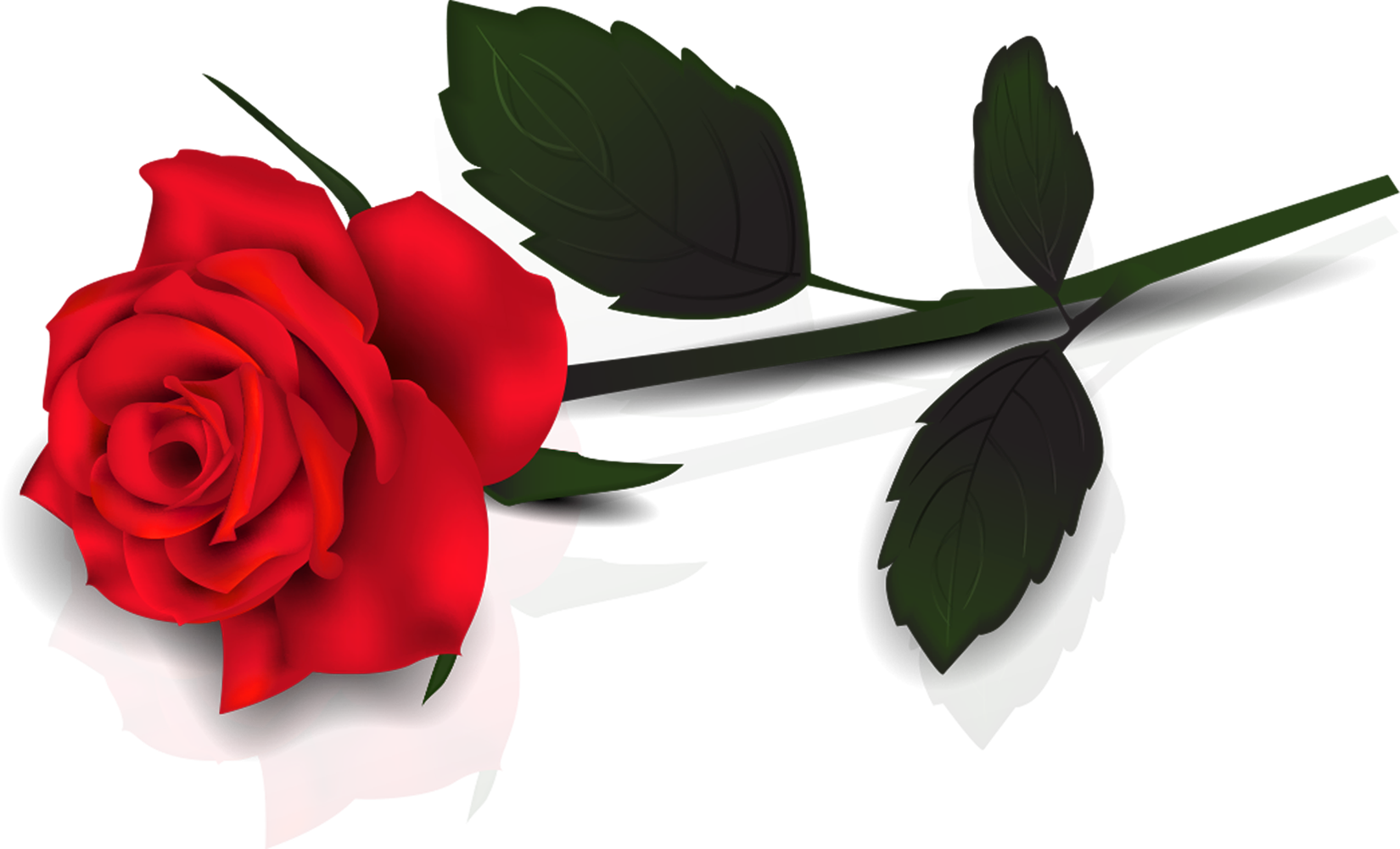 Lovely transparent red rose. Clipart roses kid