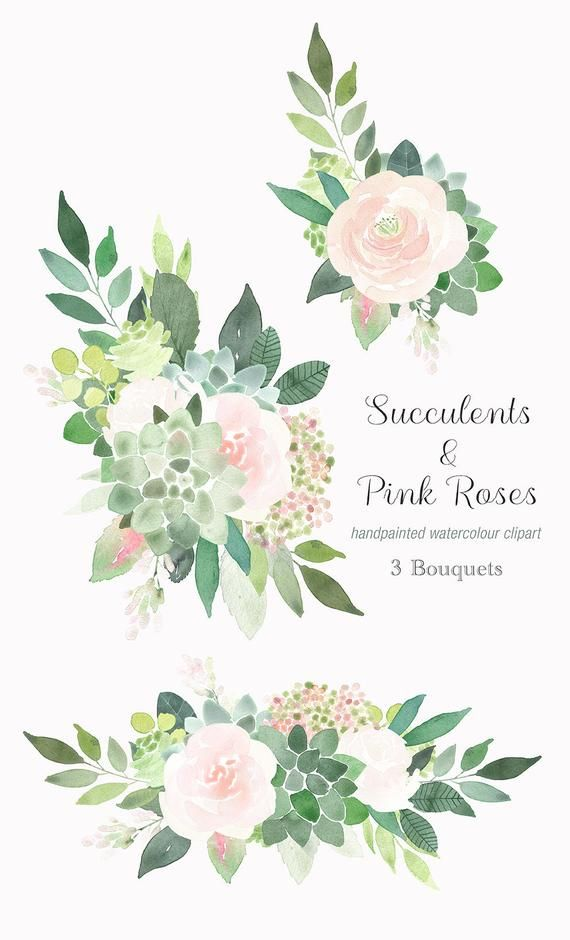 K zz t ve. Clipart rose succulent