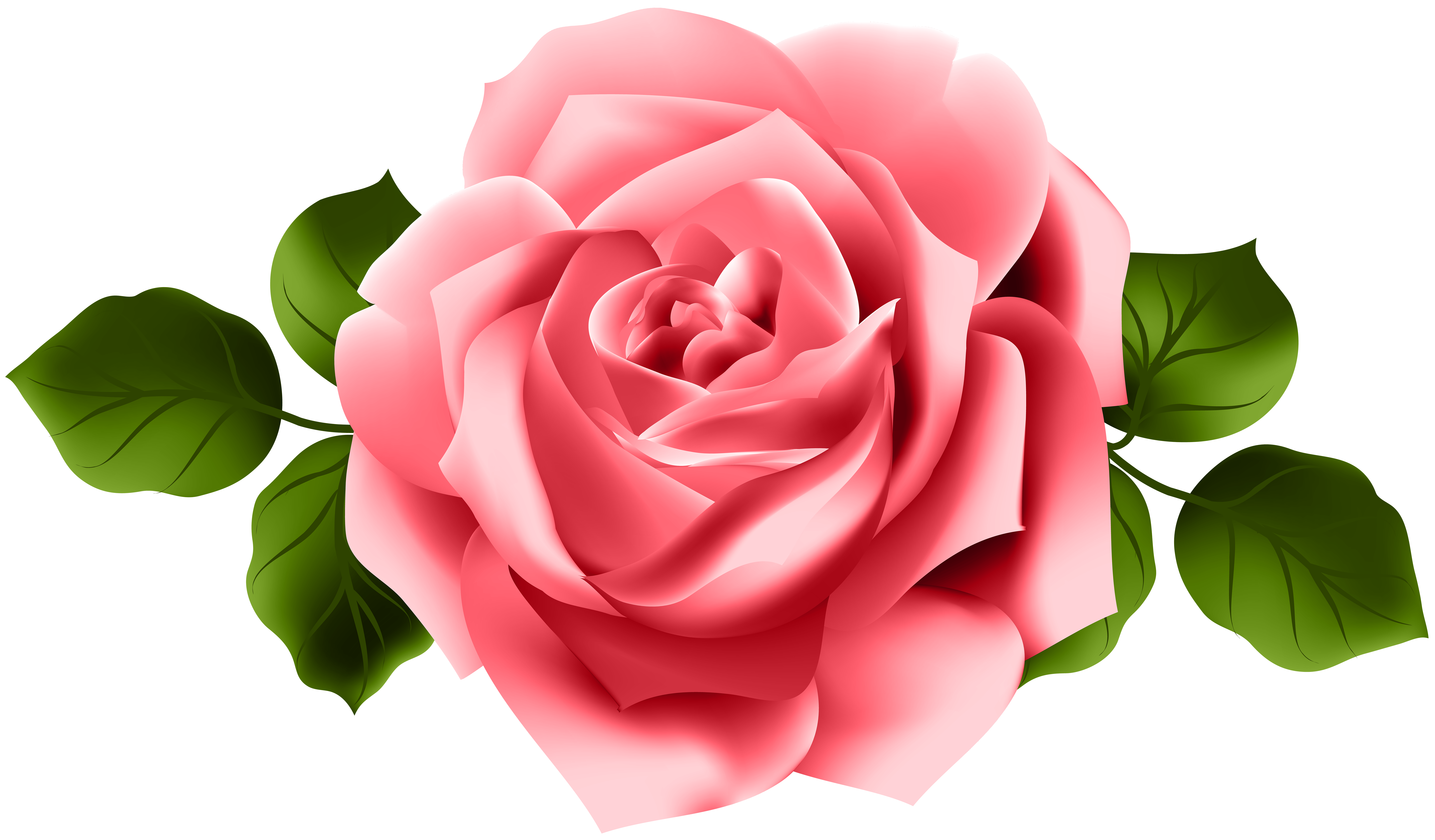 Red transparent png clip. Clipart rose tea