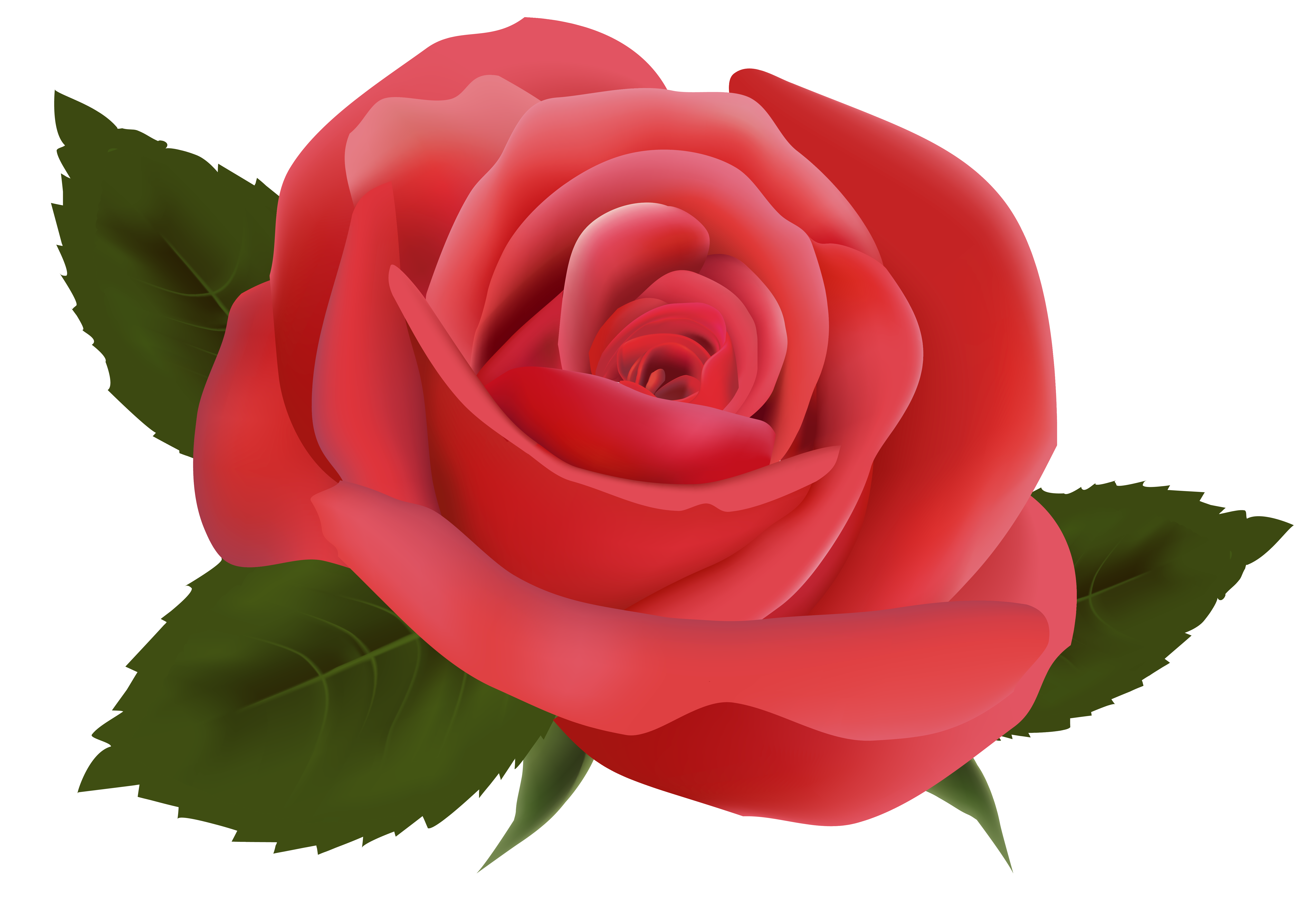 Clipart rose tea. Red png image gallery