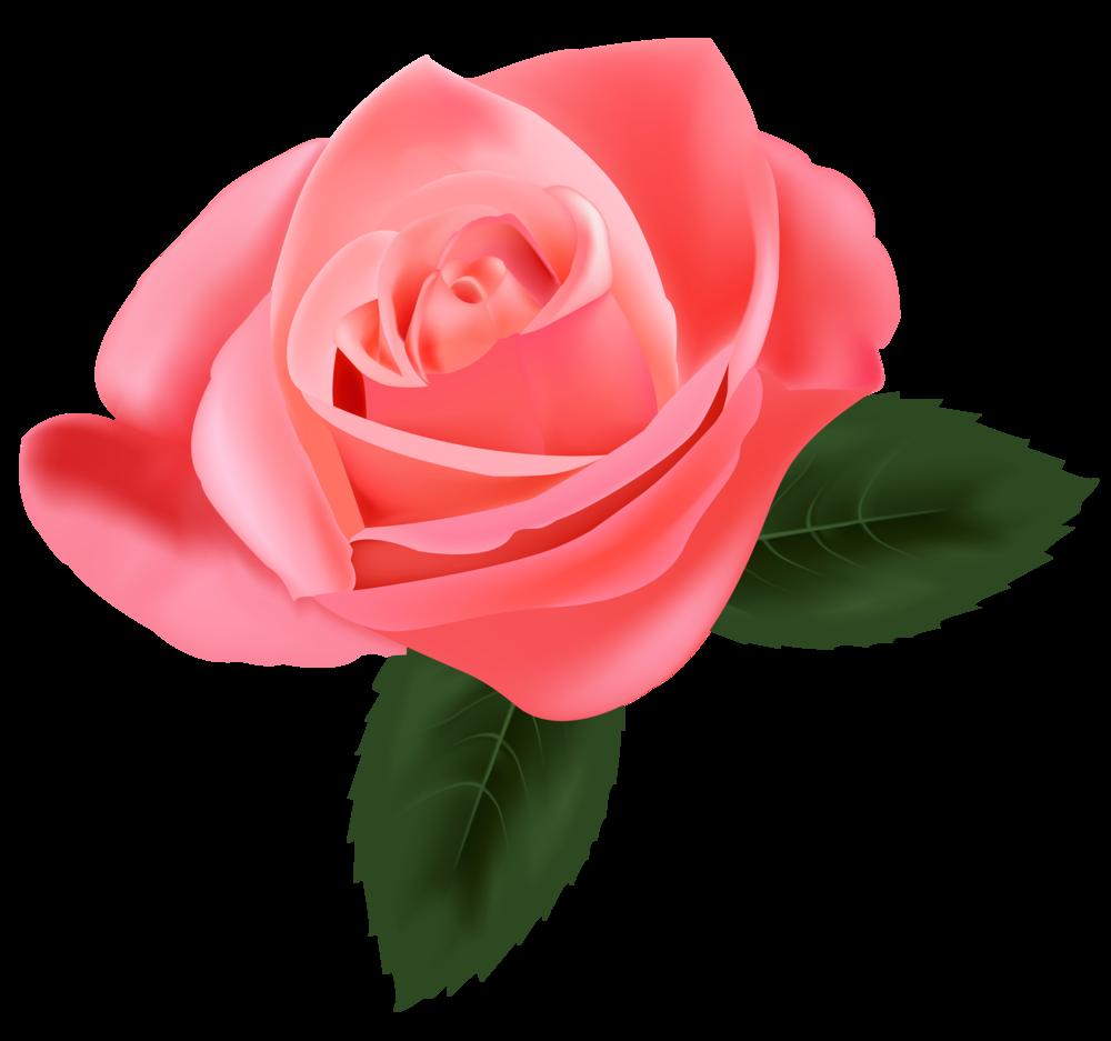 Pink rose png . Clipart roses tea