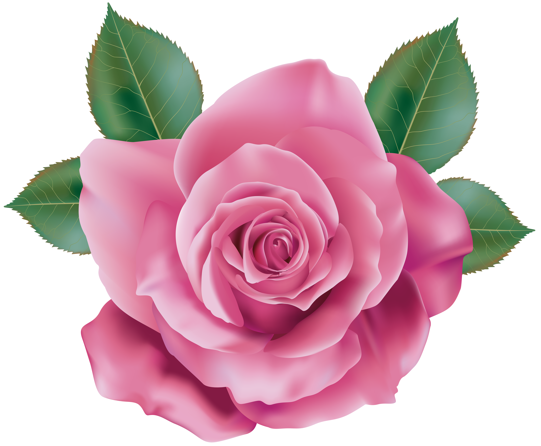 Pink rose transparent png. Clipart roses blossom