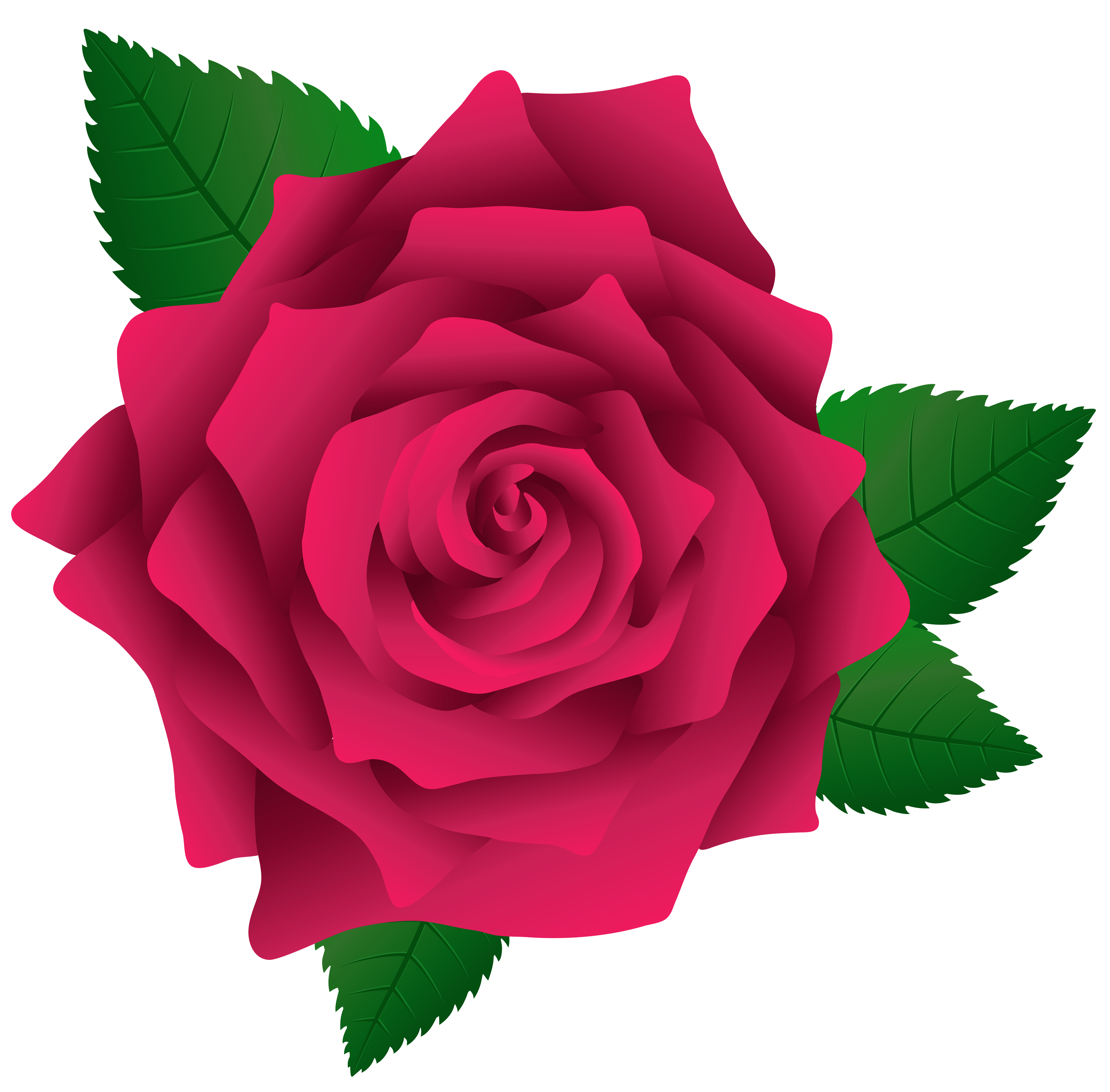 Clipart rose tea. Pink png image gallery