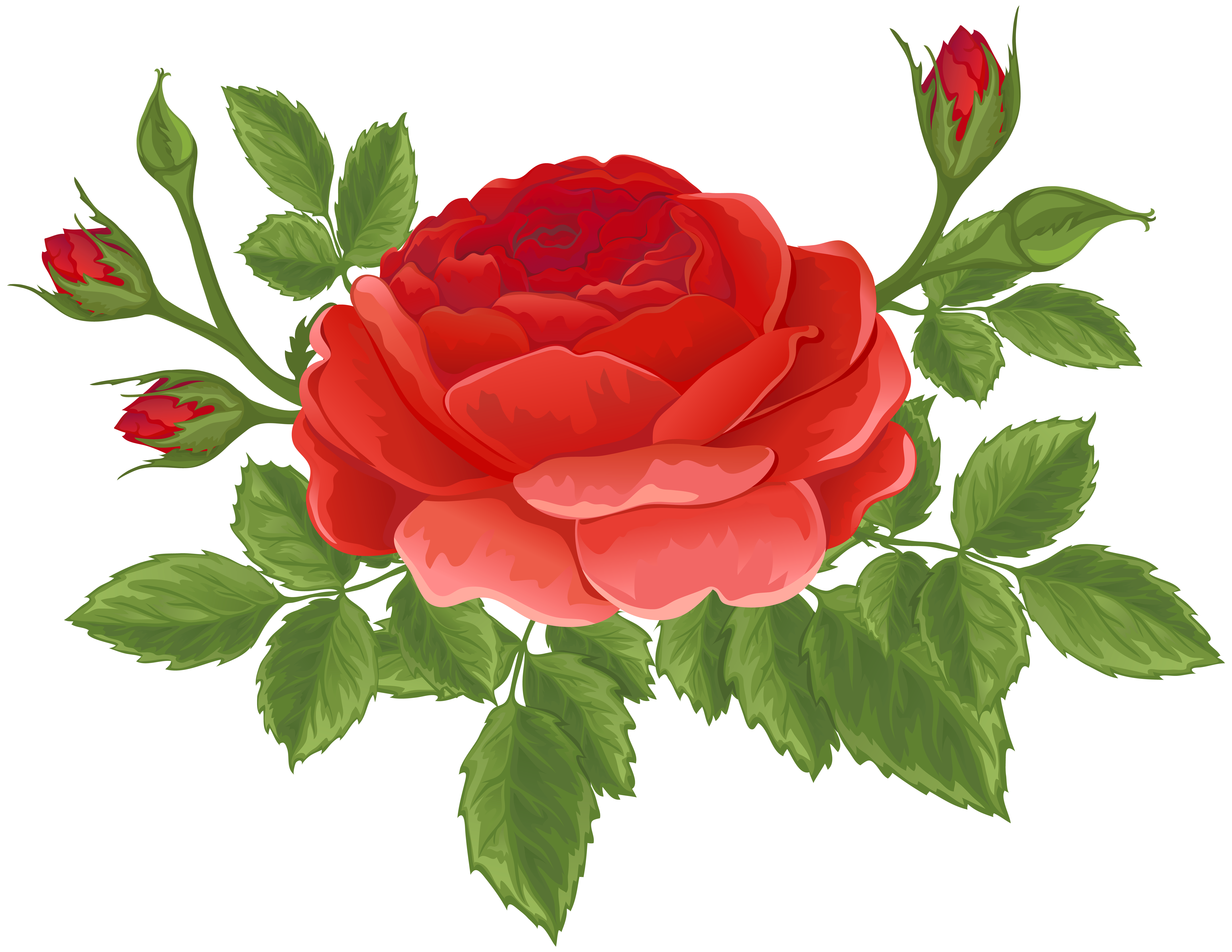 Red with buds png. Clipart rose top