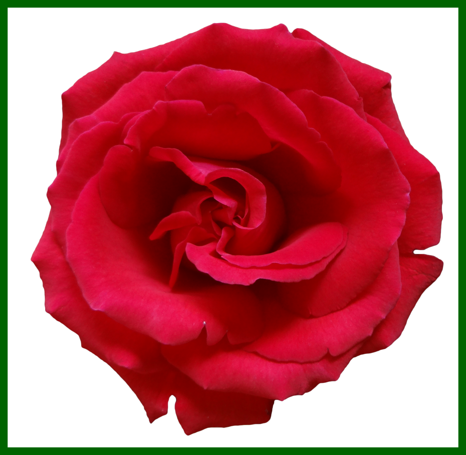Clipart rose top. Amazing red decor flower